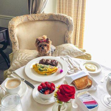 Pies i jego luksusowe życie