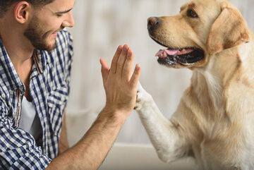 Pies i jego właściciel, zdjęcie ilustracyjne