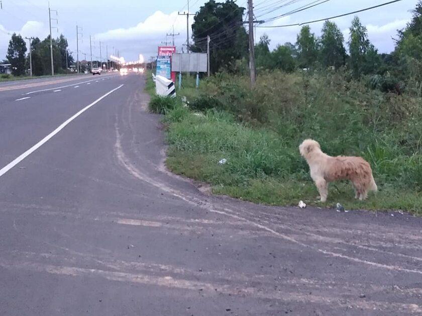 Pies, który czekał na właściciela
