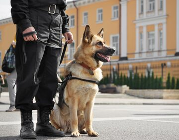 Pies policyjny z opiekunem, zdjęcie ilustracyjne