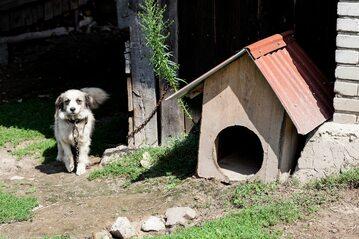 Pies przy budzie, zdj. ilustracyjne