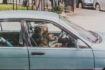 Pies w aucie (zdjęcie ilustracyjne)