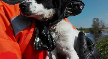 Pies wyłowiony przez strażaków