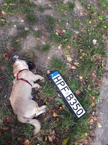 Pies zabity przez policjantów