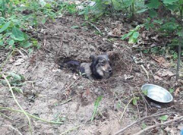Pies zakopany żywcem w lesie