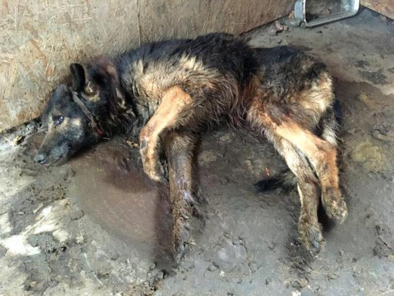 Pies znaleziony w zakładzie kamieniarskim