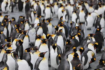 Pingwiny, zdjęcie ilustracyjne