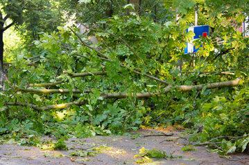Połamane drzewo, zdjęcie ilustracyjne