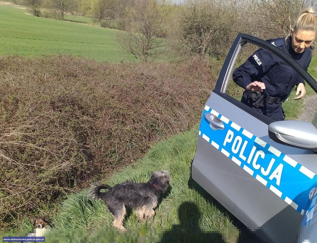 Policjanci uratowali dwa psy