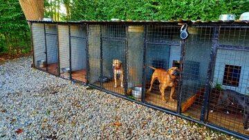 Policyjne zdjęcie u organizatora nielegalnych walk psów