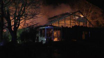 Pożar małpiarni w niemieckim zoo
