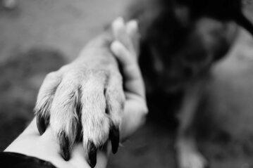 Psia łapka, zdjęcie ilustracyjne