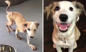 Psia metamorfoza przed i po adopcji