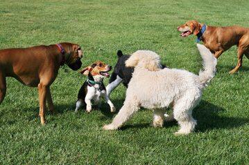 Psy bawiące się w parku, zdjęcie ilustracyjne