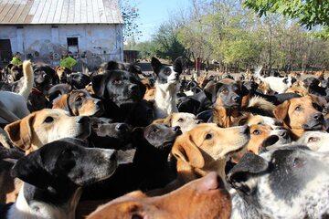 Psy przebywające w schronisku Sashy