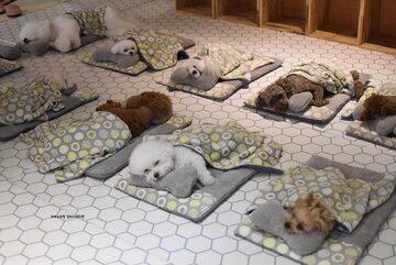 Psy śpiące w specjalnym przedszkolu