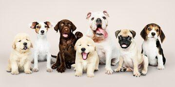 Psy, zdj. ilustracyjne