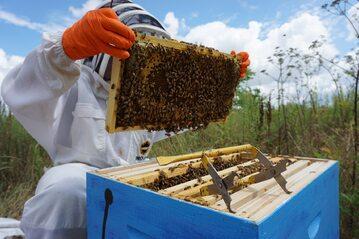 Pszczelarz, zdjęcie ilustracyjne