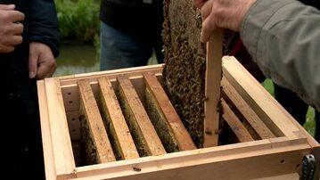 Pszczoły z pasieki w Białymstoku