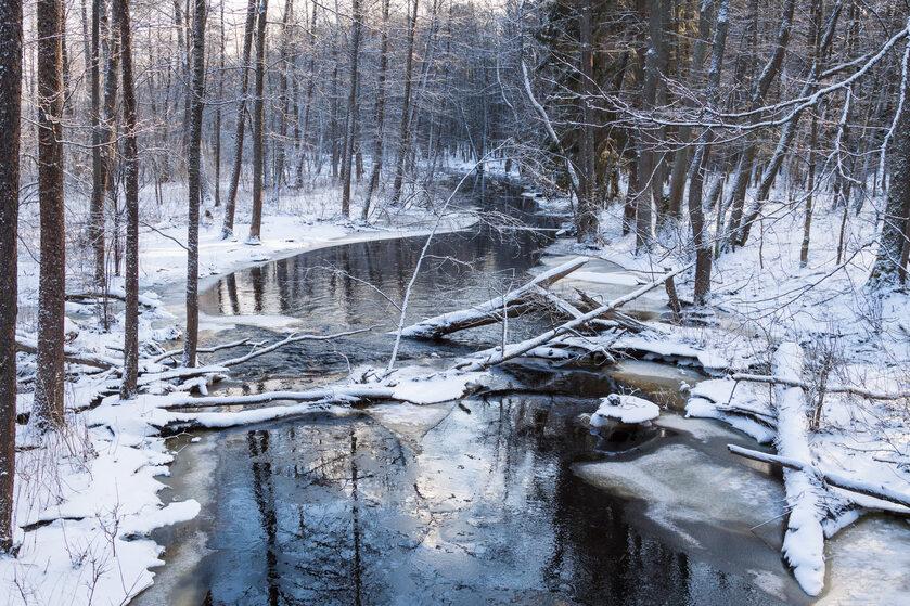 Puszcza Białowieska w zimie