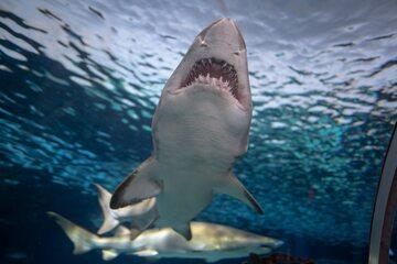 Rekin, zdjęcie ilustracyjne