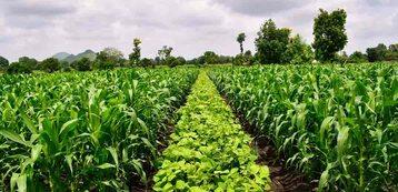 Rolnictwo regeneracyjne