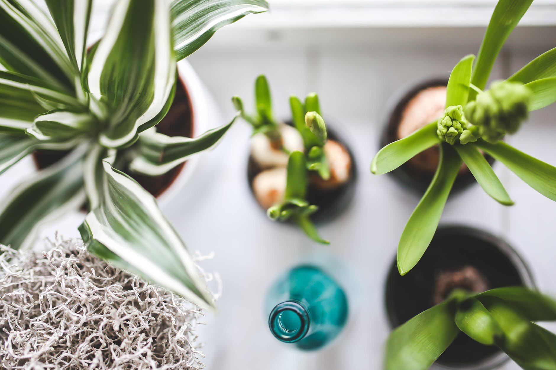 Rośliny w doniczkach