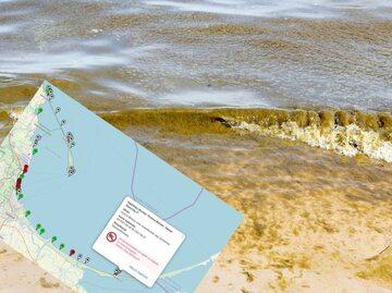 Sinice nad Morzem Bałtyckim