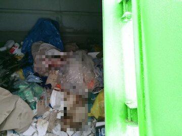 Skatowane psy policjanci znaleźli na śmietniku