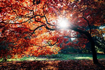 Słońce, jesień, zdj. ilustracyjne
