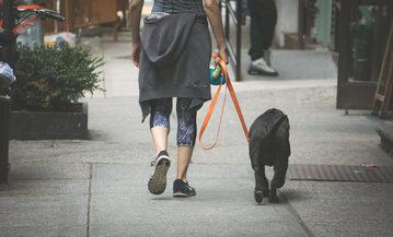 Spacer z psem, zdjęcie ilustracyjne