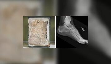 Stopa słonia kontra stopa człowieka