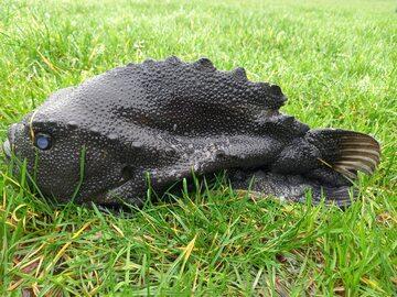 Tasza znaleziona u wybrzeży Kornwalii