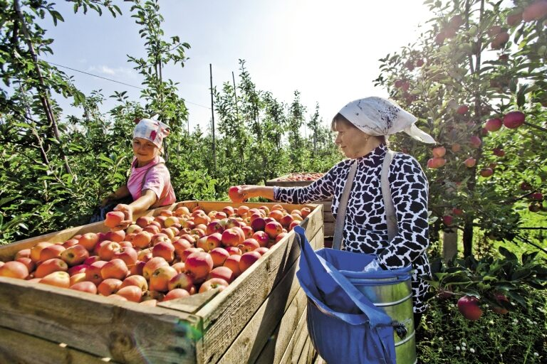 Ukraińscy pracownicy sezonowi otrzymują stawki, za które Polacy nie chcą pracować
