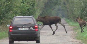 W autach można zamontować odstraszacze dzikich zwierząt