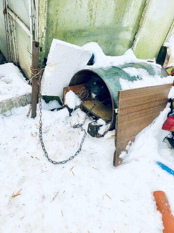 W takich warunkach był trzymany pies
