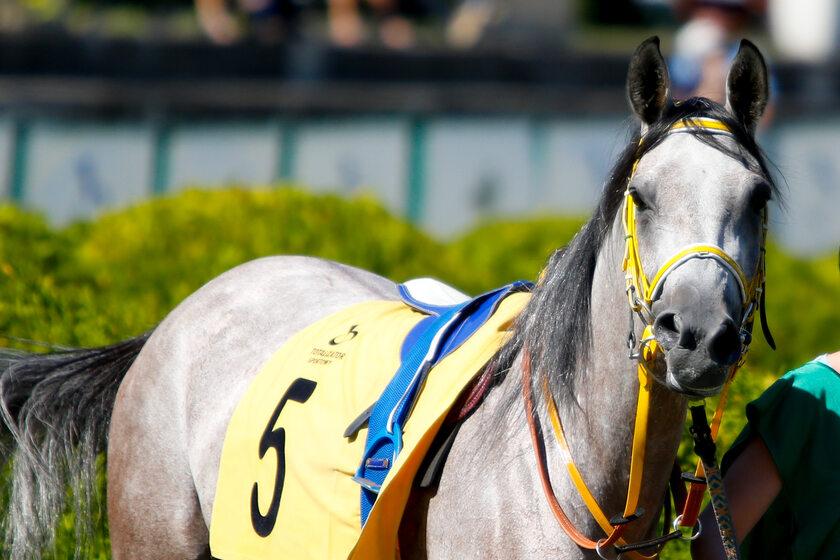 W tym roku imprezie towarzyszył wyścig koni na Służewcu