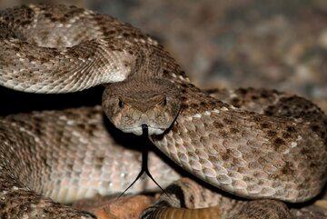 Wąż, zdjęcie ilustracyjne