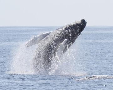 Wieloryb, zdjęcie ilustracyjne
