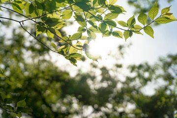 Wiosna, słońce (zdj. ilustracyjne)