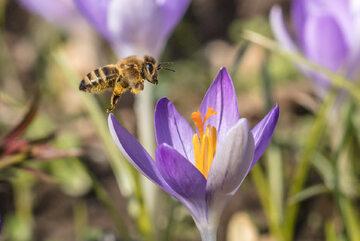 Wiosna, zdj. ilustracyjne