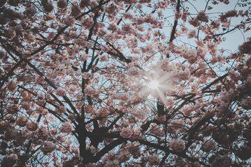 Wiosna - zdjęcie ilustracyjne