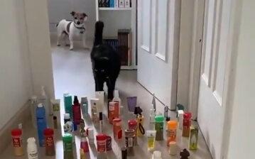 """Wyzwanie """"Kot kontra pies"""""""