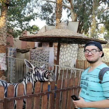 Zebra czy osioł?