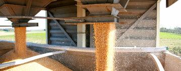 Ziarna zbóż, zdjęcie ilustracyjne