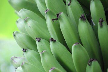 Zielone banany