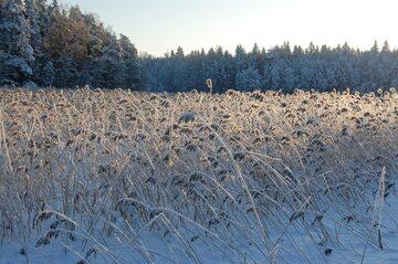 Zima, śnieg
