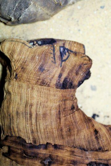 Znalezione mumie kotów