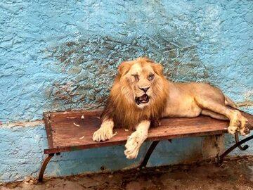 Zoo w Fier