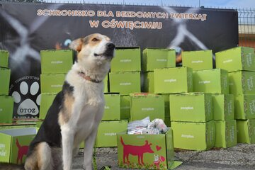 ZOOPAKA – program charytatywny sklepu zooplus, w którym bezdomne zwierzaki otrzymują paczki z karmą i przysmakami